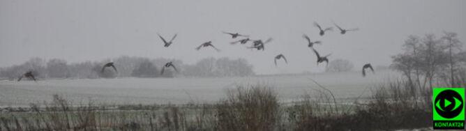 Prognoza pogody na pięć dni: wiosna robi w tył zwrot. Spadnie deszcz ze śniegiem, mocno powieje