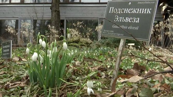 Mieszkańcy się cieszą, naukowcy niekoniecznie. W Moskwie zakwitły już kwiaty