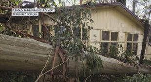 Wiatr łamał i wyrywał drzewa z korzeniami na przedmieściach Melbourne